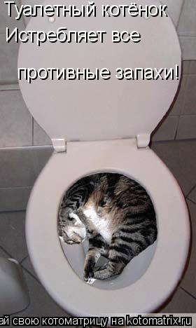 Котоматрица: Туалетный котёнок  Истребляет все противные запахи!
