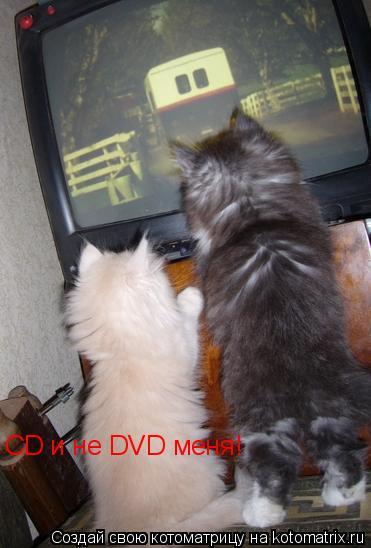 Котоматрица: CD и не DVD меня!
