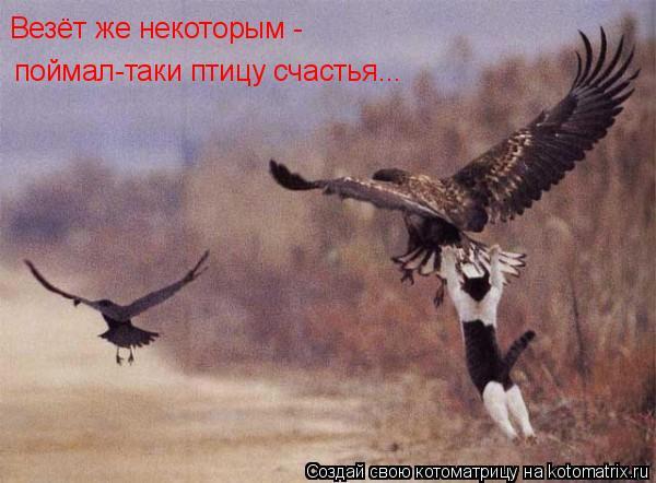 Котоматрица: поймал-таки птицу счастья... Везёт же некоторым -