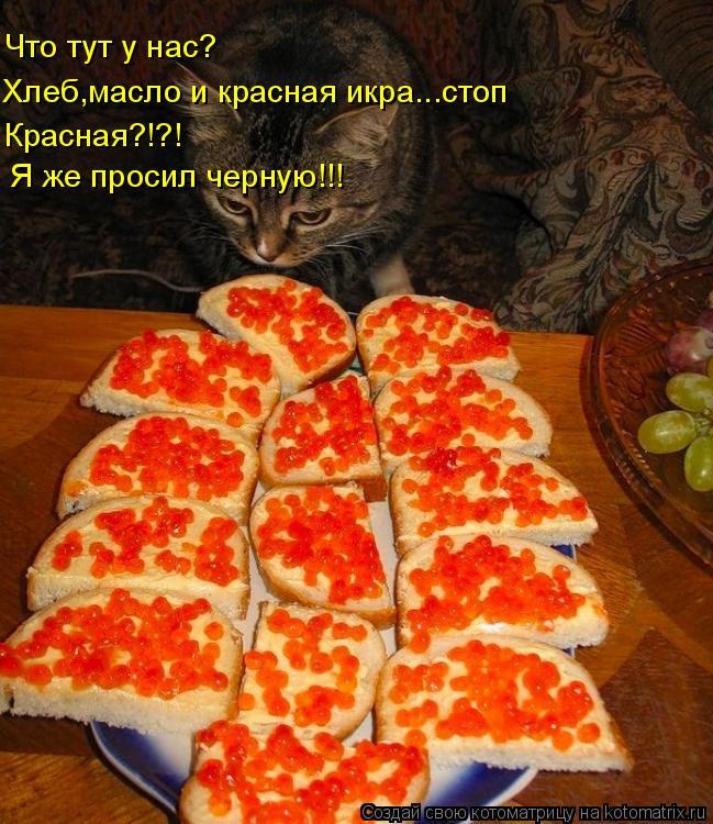 Котоматрица: Хлеб,масло и красная икра...стоп Что тут у нас? Красная?!?! Я же просил черную!!!