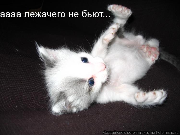 Котоматрица: аааа лежачего не бьют...