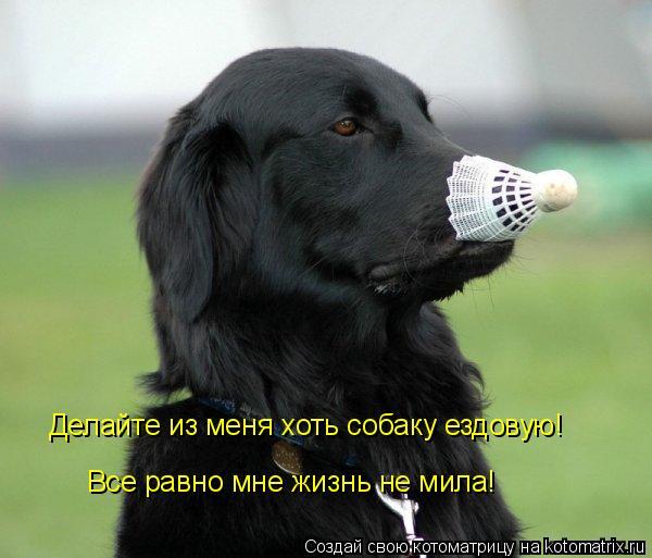Котоматрица: Делайте из меня хоть собаку ездовую! Все равно мне жизнь не мила!