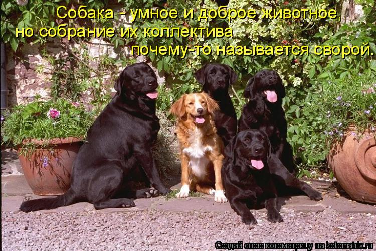 Котоматрица: почему-то называется сворой. но собрание их коллектива  Собака - умное и доброе животное,