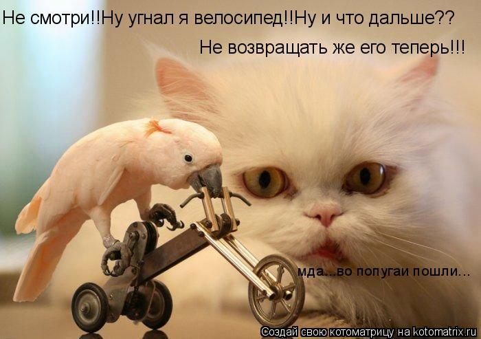 Котоматрица: Не смотри!!Ну угнал я велосипед!!Ну и что дальше?? мда...во попугаи пошли... Не возвращать же его теперь!!!