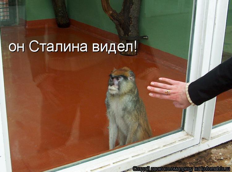 Котоматрица: он Сталина видел!