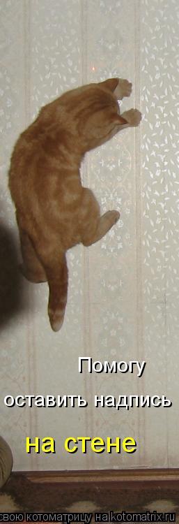 Котоматрица: Помогу оставить надпись на стене