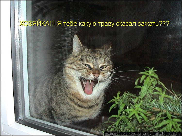 Котоматрица: ХОЗЯЙКА!!! Я тебе какую траву сказал сажать???