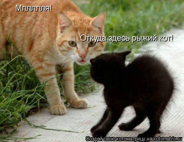 Котоматрица: Мллллля! Откуда здесь рыжий кот!