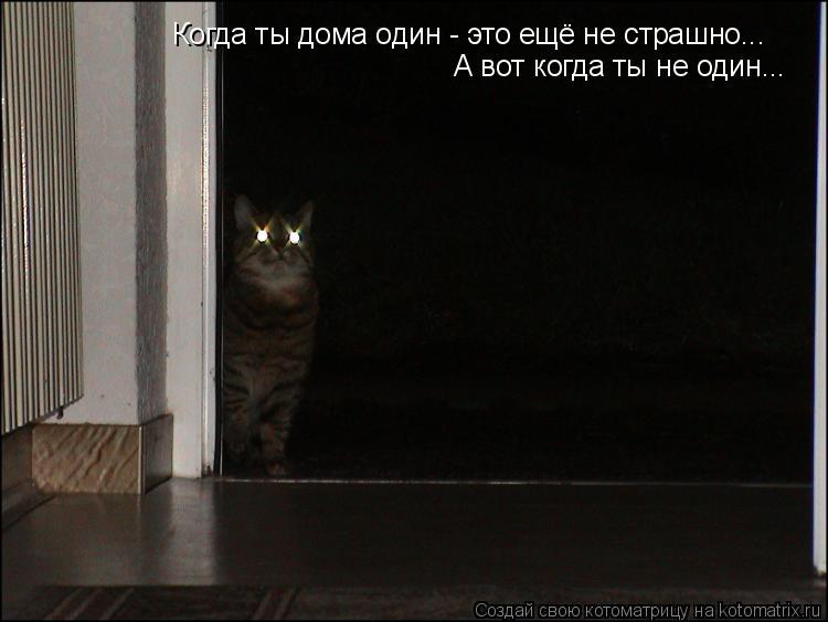 Котоматрица: Когда ты дома один - это ещё не страшно... А вот когда ты не один...