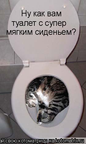 Котоматрица: Ну как вам туалет с супер  мягким сиденьем?