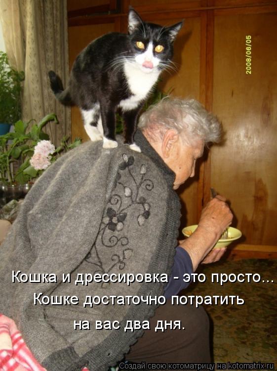 Котоматрица: Кошка и дрессировка - это просто...  Кошке достаточно потратить  на вас два дня.
