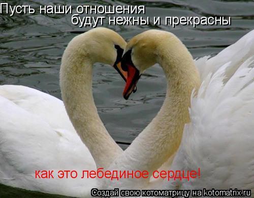 Котоматрица: Пусть наши отношения будут нежны и прекрасны как это лебединое сердце!
