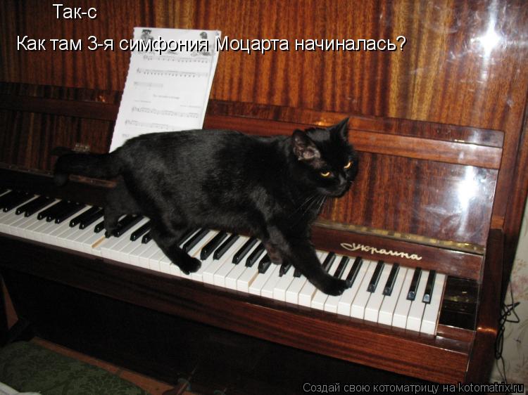 Котоматрица: Так-с  Как там 3-я симфония Моцарта начиналась?