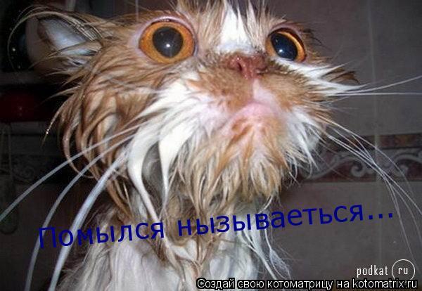 Котоматрица: Помылся нызываеться...