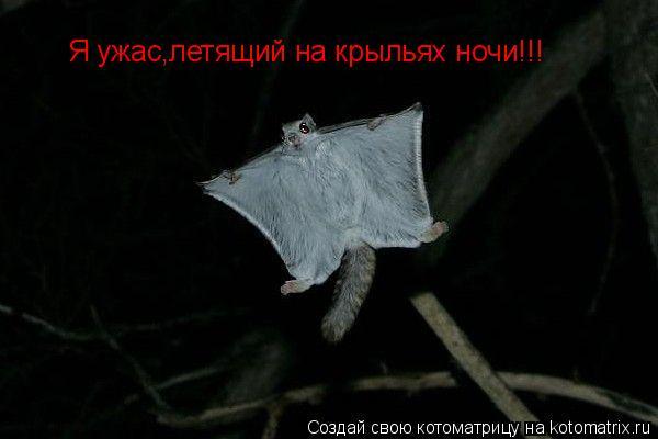 Котоматрица: Я ужас,летящий на крыльях ночи!!!