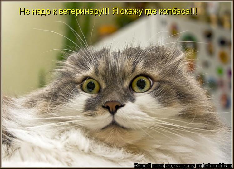 Котоматрица: Не надо к ветеринару!!! Я скажу где колбаса!!!