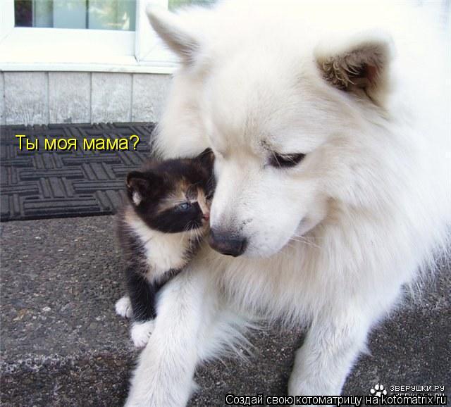 Котоматрица: Ты моя мама?