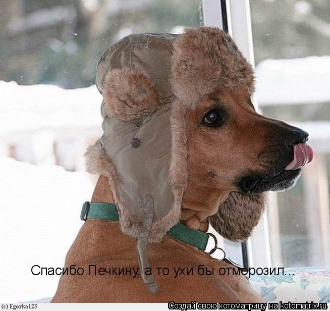Котоматрица: Спасибо Печкину, а то ухи бы отморозил...