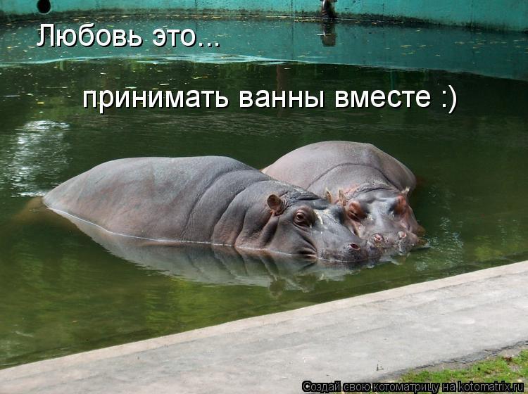 Котоматрица: Любовь это... принимать ванны вместе :)