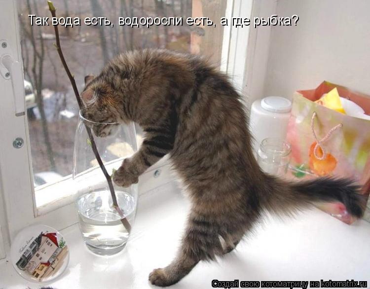 Котоматрица: Так вода есть, водоросли есть, а где рыбка?