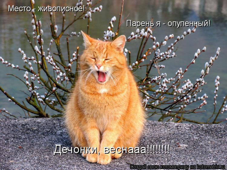 Котоматрица: Место - живописное! Парень я - опупенный! Дечонки, веснааа!!!!!!!!