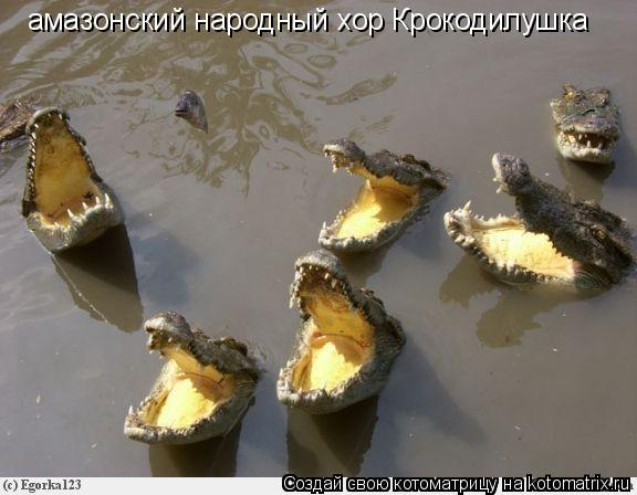 Котоматрица: амазонский народный хор Крокодилушка
