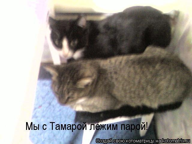 Котоматрица: Мы с Тамарой лежим парой!
