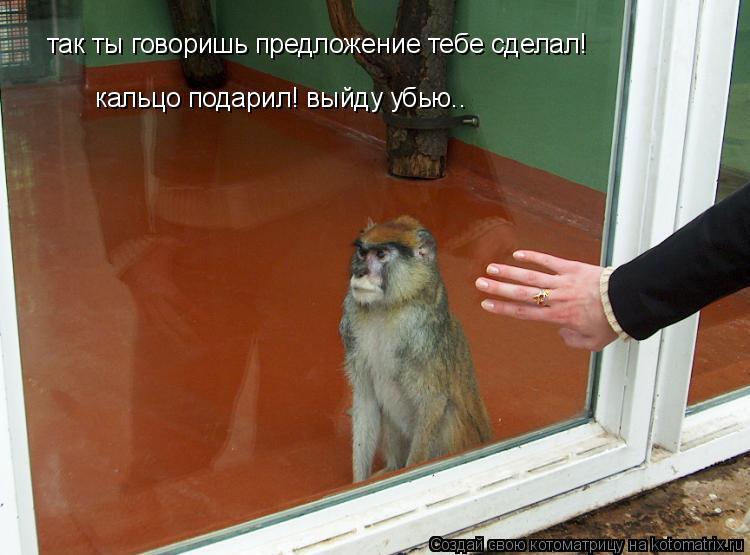 Котоматрица: так ты говоришь предложение тебе сделал! кальцо подарил! выйду убью..