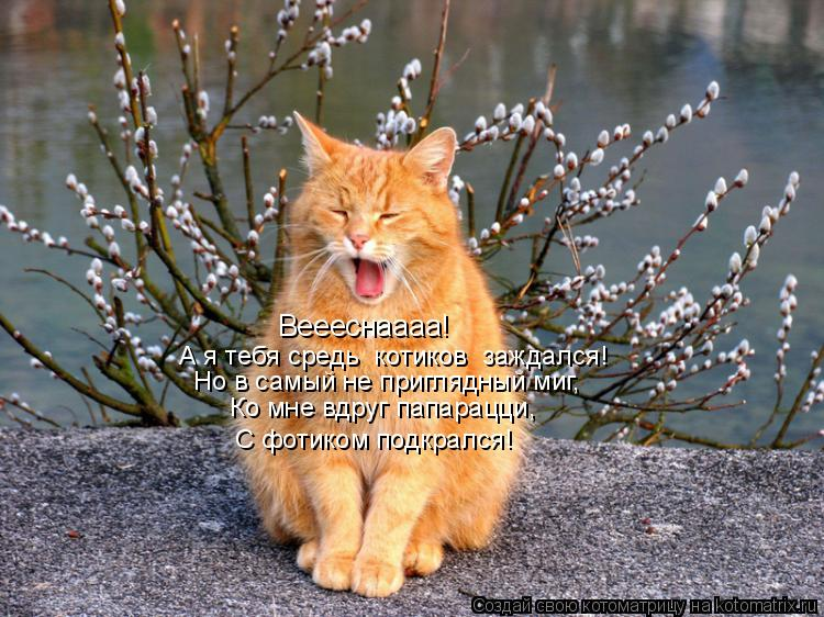 Котоматрица: Веееснаааа! А я тебя средь «котиков» заждался! Но в самый не приглядный миг, Ко мне вдруг папарацци, С фотиком подкрался!