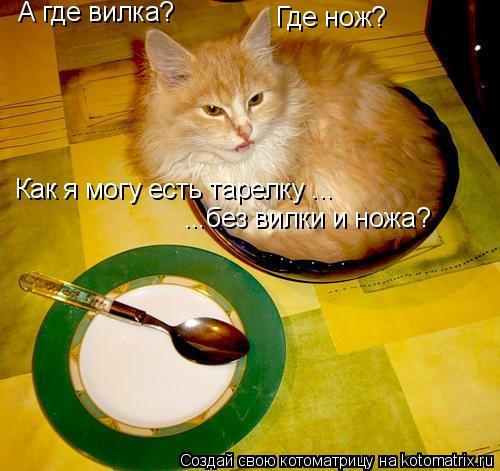 Котоматрица: А где вилка? Где нож? Как я могу есть тарелку ...  ...без вилки и ножа?
