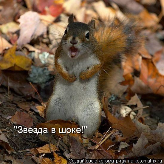 "Котоматрица: ""Звезда в шоке!"""