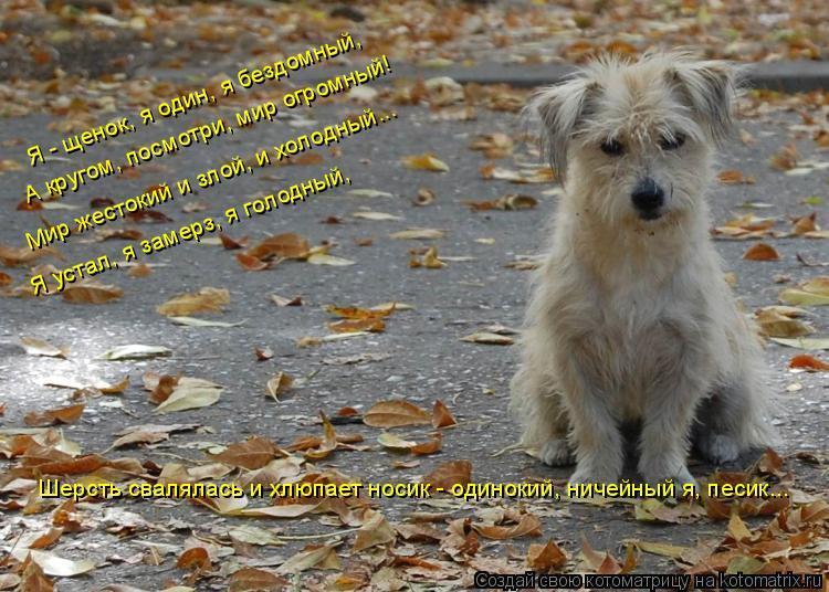 Котоматрица: Я - щенок, я один, я бездомный, А кругом, посмотри, мир огромный! Мир жестокий и злой, и холодный... Я устал, я замерз, я голодный, Шерсть свалялас
