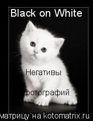 Котоматрица: Black on White Негативы  фотографий