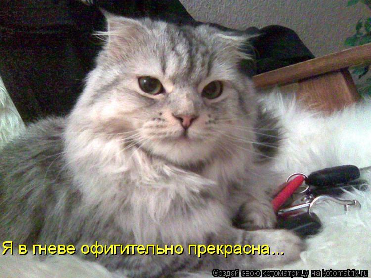 Котоматрица: Я в гневе офигительно прекрасна...