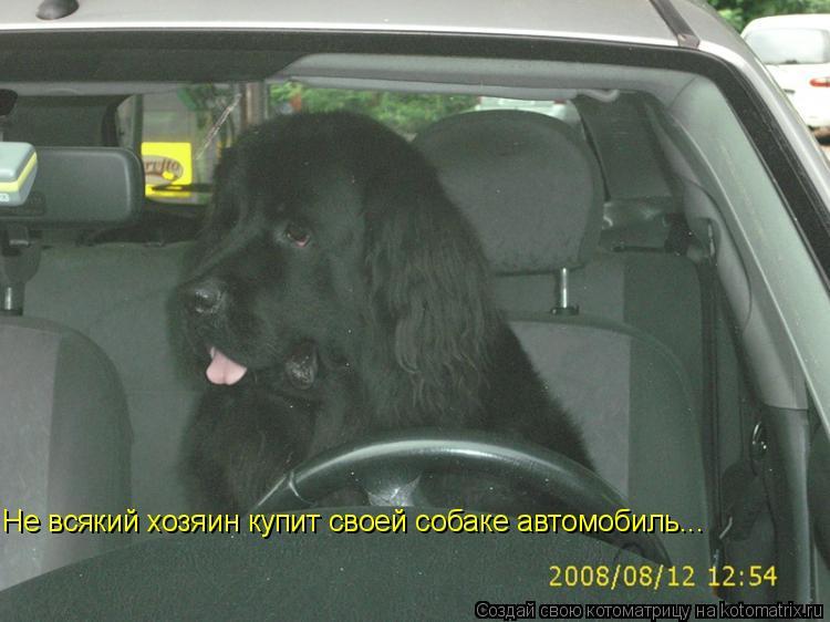 Котоматрица: Не всякий хозяин купит своей собаке автомобиль...