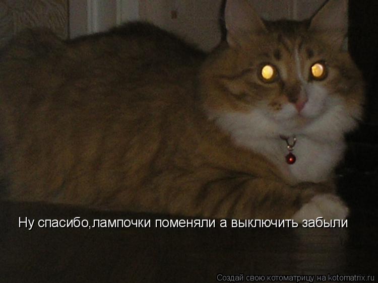 Котоматрица: Ну спасибо,лампочки поменяли а выключить забыли