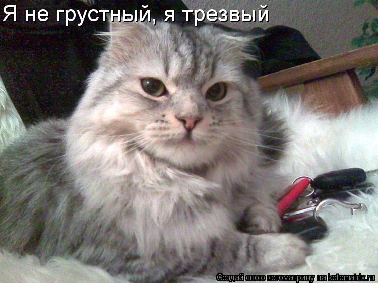 Котоматрица: Я не грустный, я трезвый