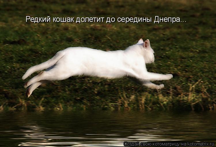 Котоматрица: Редкий кошак долетит до середины Днепра...