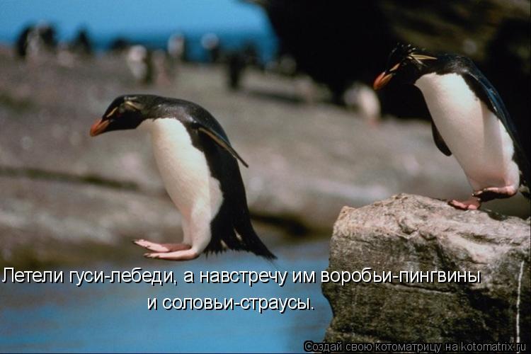 Котоматрица: Летели гуси-лебеди, а навстречу им воробьи-пингвины   и соловьи-страусы.