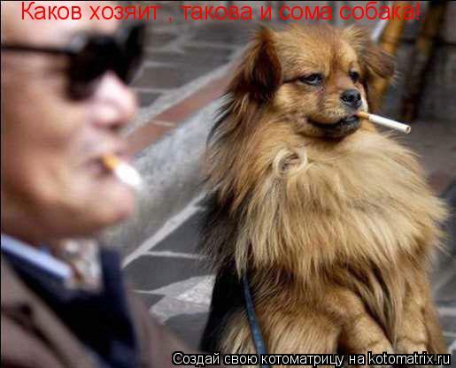 Котоматрица: Каков хозяит , такова и сома собака!