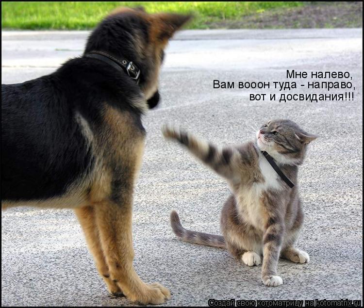 Котоматрица: Мне налево, Вам вооон туда - направо, вот и досвидания!!!