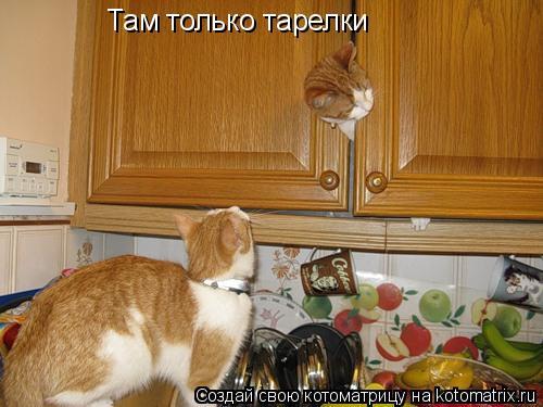Котоматрица: Там только тарелки