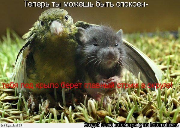 Котоматрица: Теперь ты можешь быть спокоен- тебя под крыло берет главный стриж в округе!