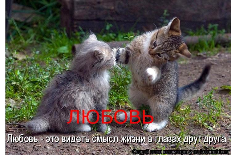 Котоматрица: Любовь - это видеть смысл жизни в глазах друг друга ЛЮБОВЬ