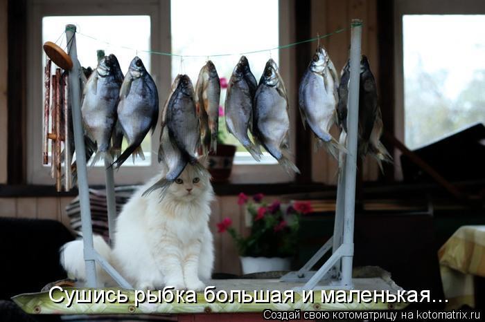 Котоматрица: Сушись рыбка большая и маленькая...