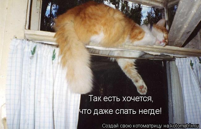 Котоматрица: Так есть хочется, что даже спать негде!