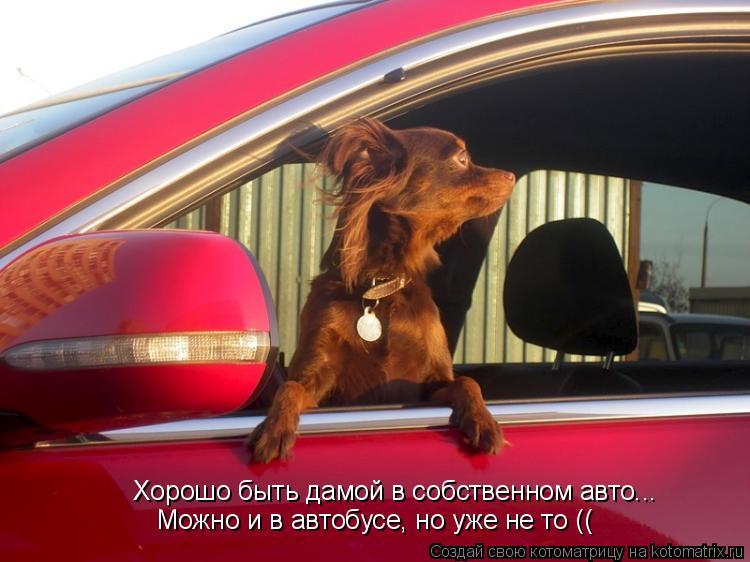 Котоматрица: Хорошо быть дамой в собственном авто... Можно и в автобусе, но уже не то ((