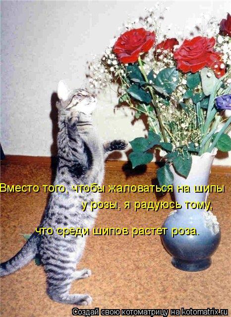 Котоматрица: Вместо того, чтобы жаловаться на шипы  у розы, я радуюсь тому, что среди шипов растет роза.