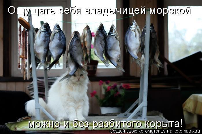 Котоматрица: Ощущать себя владычицей морской можно и без разбитого корыта!