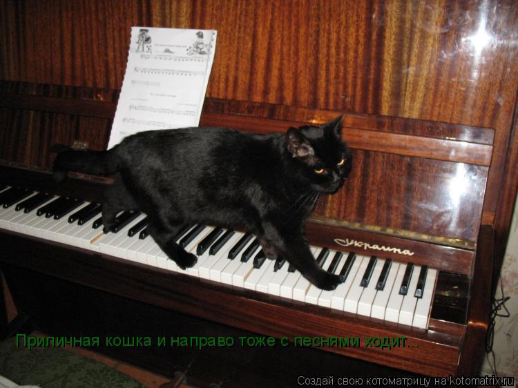 Котоматрица: Приличная кошка и направо тоже с песнями ходит...